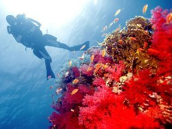 Safaga Red Sea